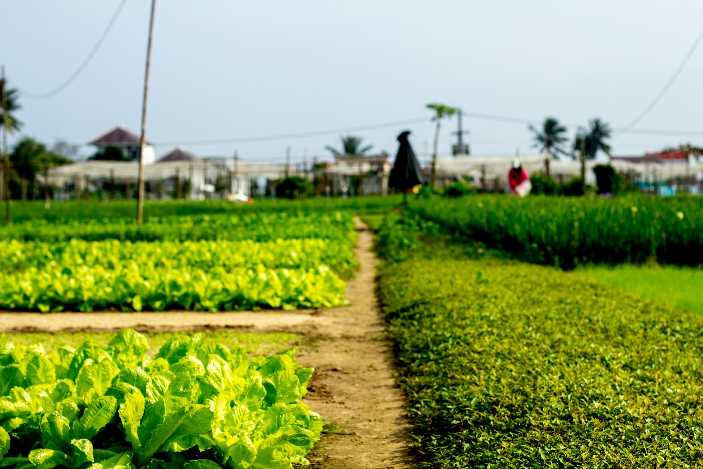 Tra Que Village - One Week Vietnam
