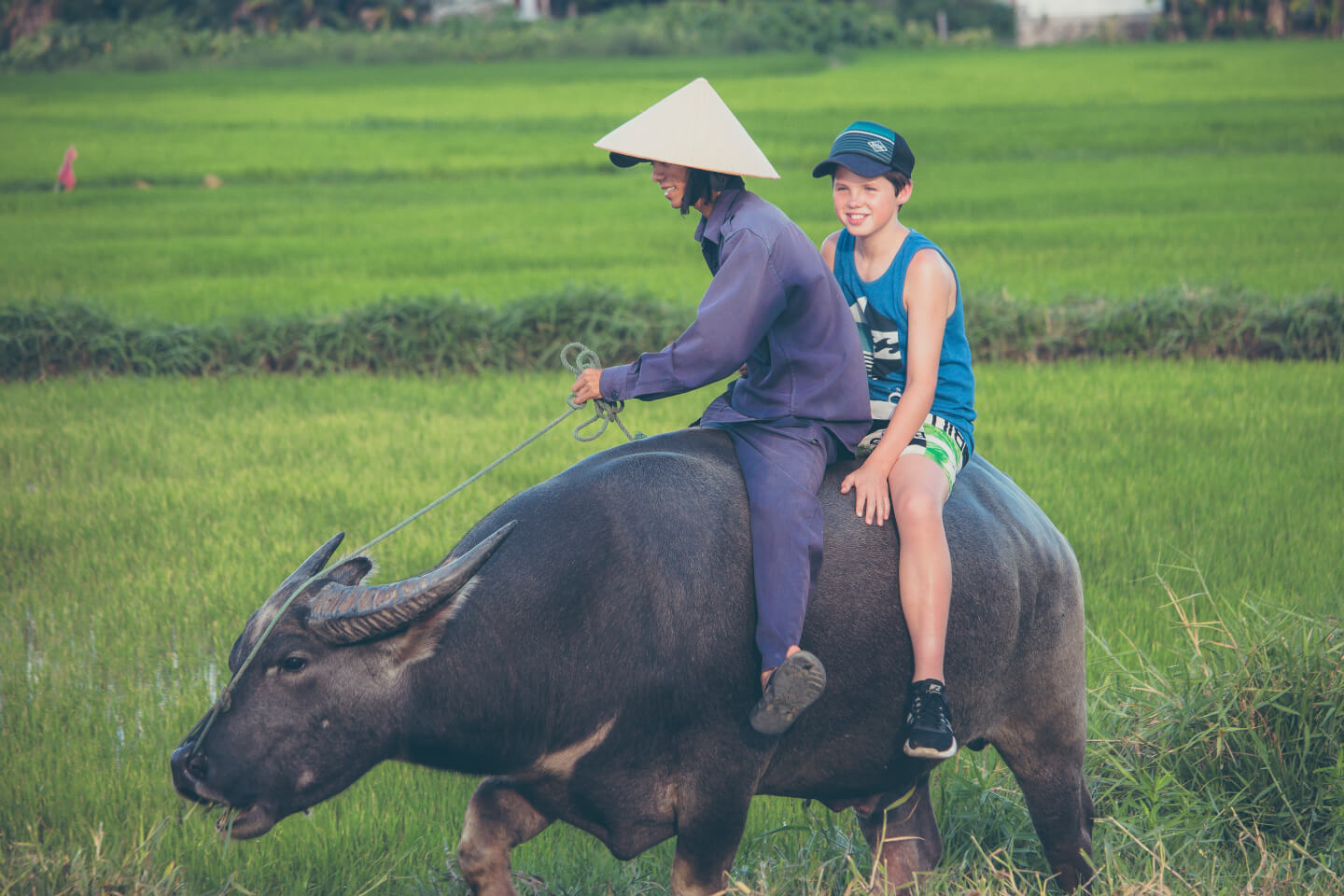 water buffalo riding in tra que vegetable village