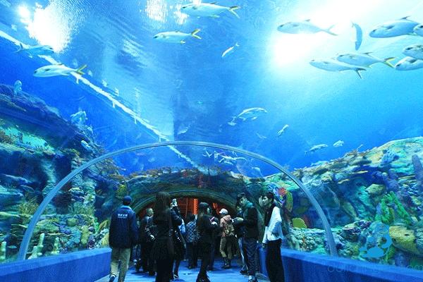 National Oceanographic Museum