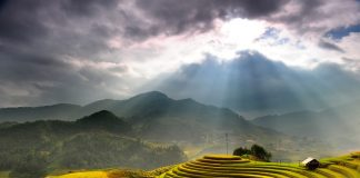 Rice terrace - Sapa