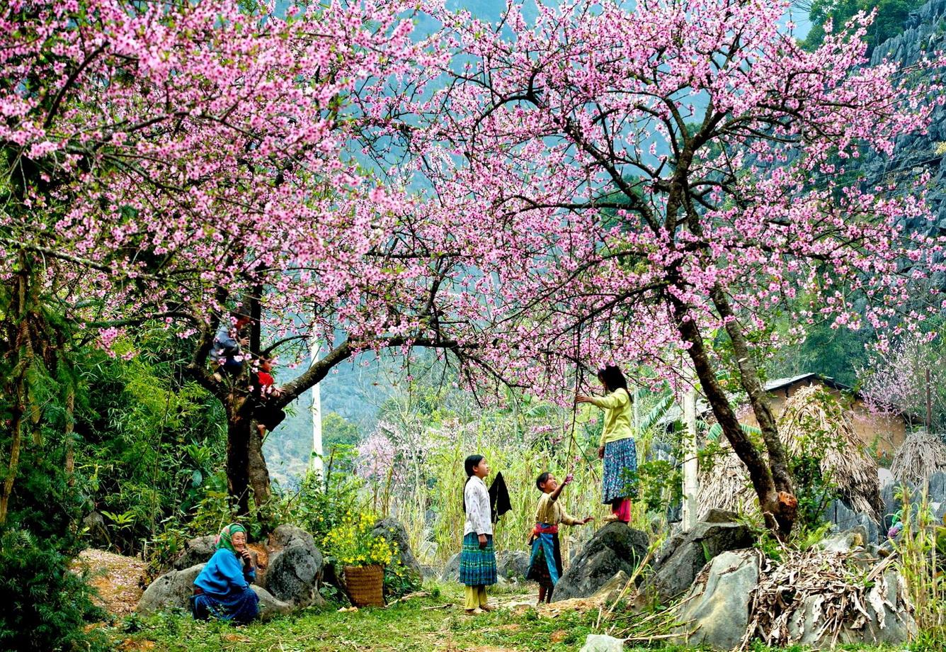 hmong-spring-sapa