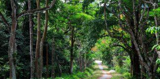 cuc-phuong-national-park-ninh-binh