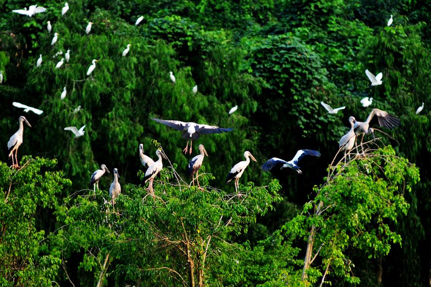 thung nham bird park ninh binh camping