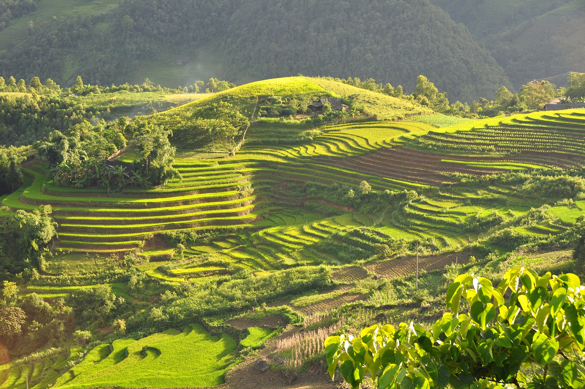 terrace-field-sapa